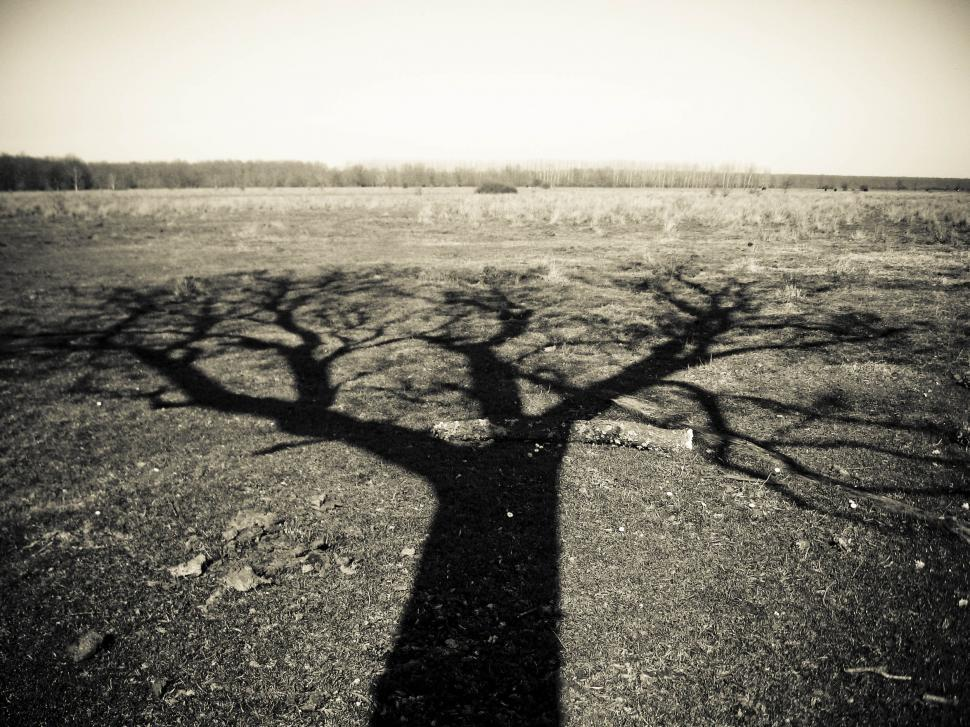 Download Free Stock Photo of lonely tree shadow in field