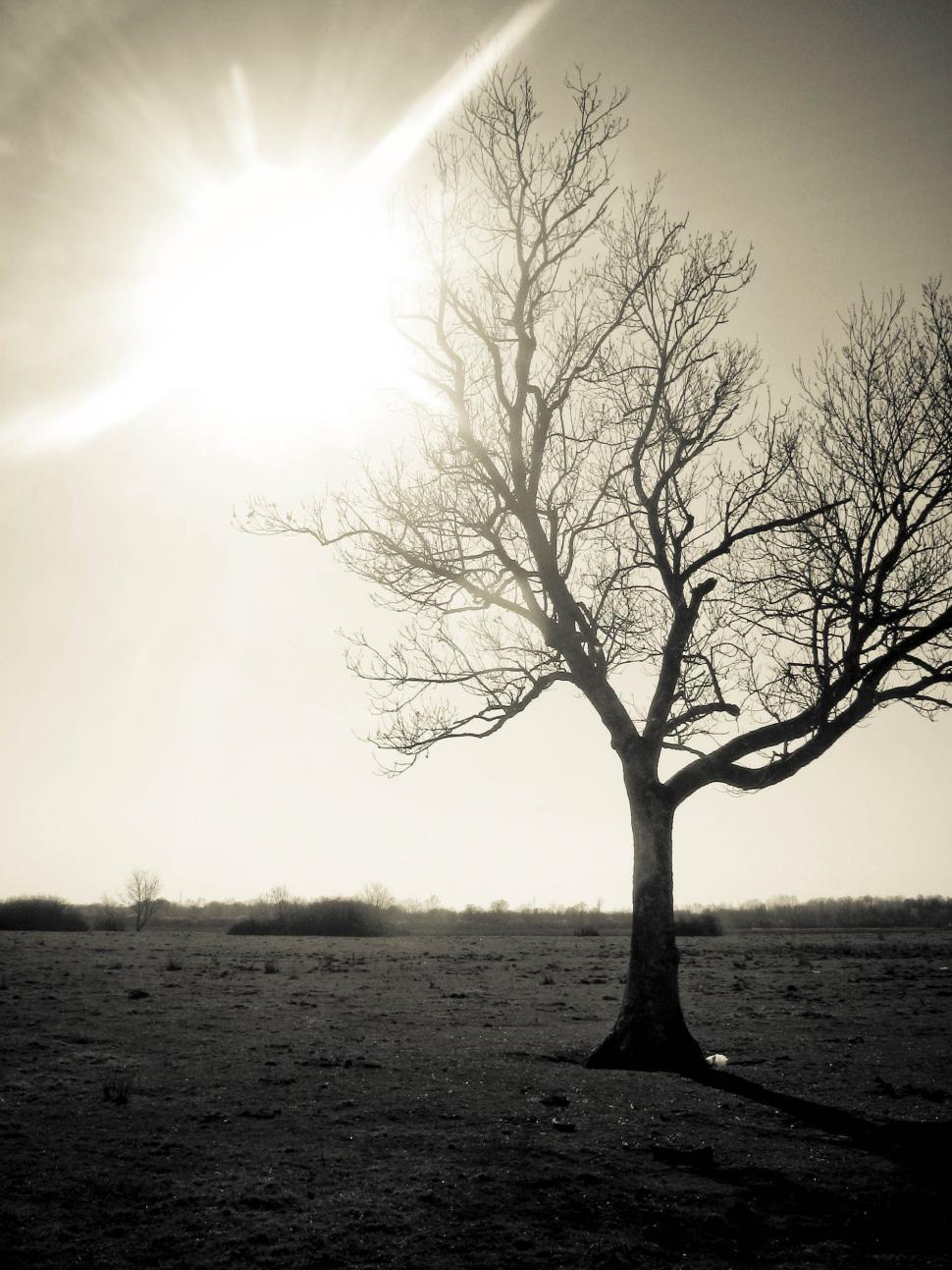 Download Free Stock Photo of Sun glare and single tree