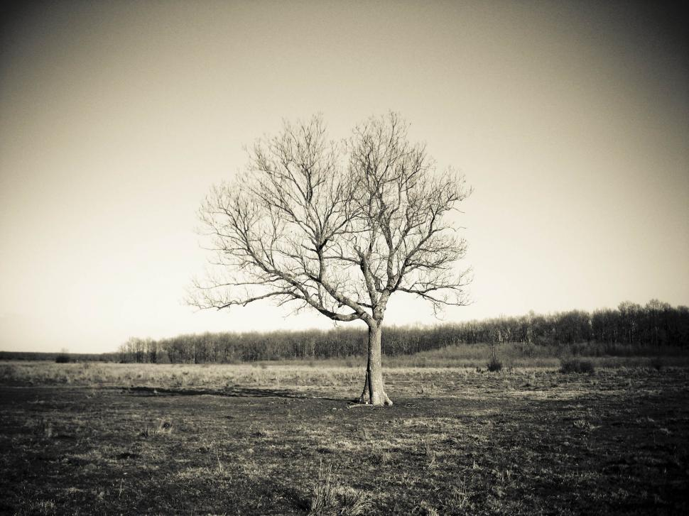 Download Free Stock HD Photo of Single tree Online