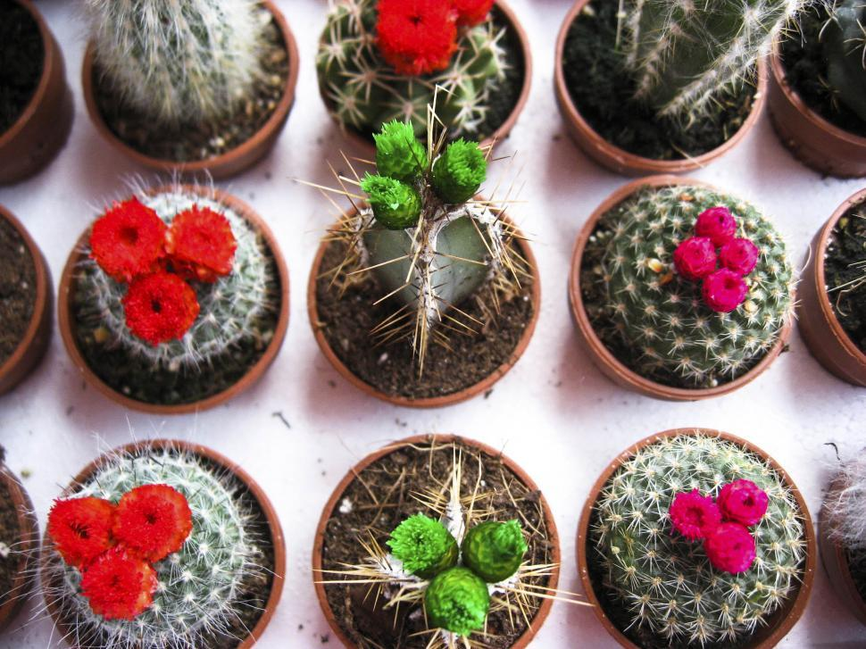 Download Free Stock Photo of Small cactus
