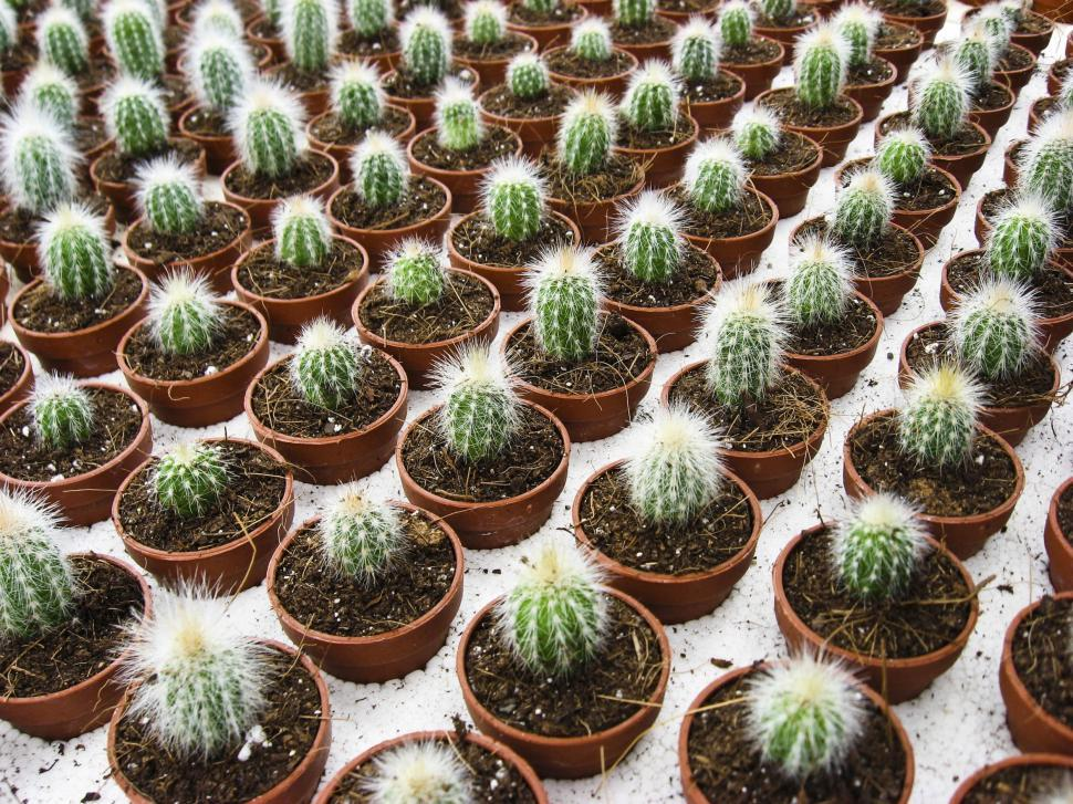 Download Free Stock Photo of Many cactus