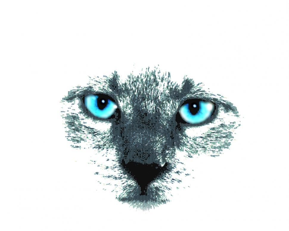 Download Free Stock HD Photo of Cat with Blue Eyes Online