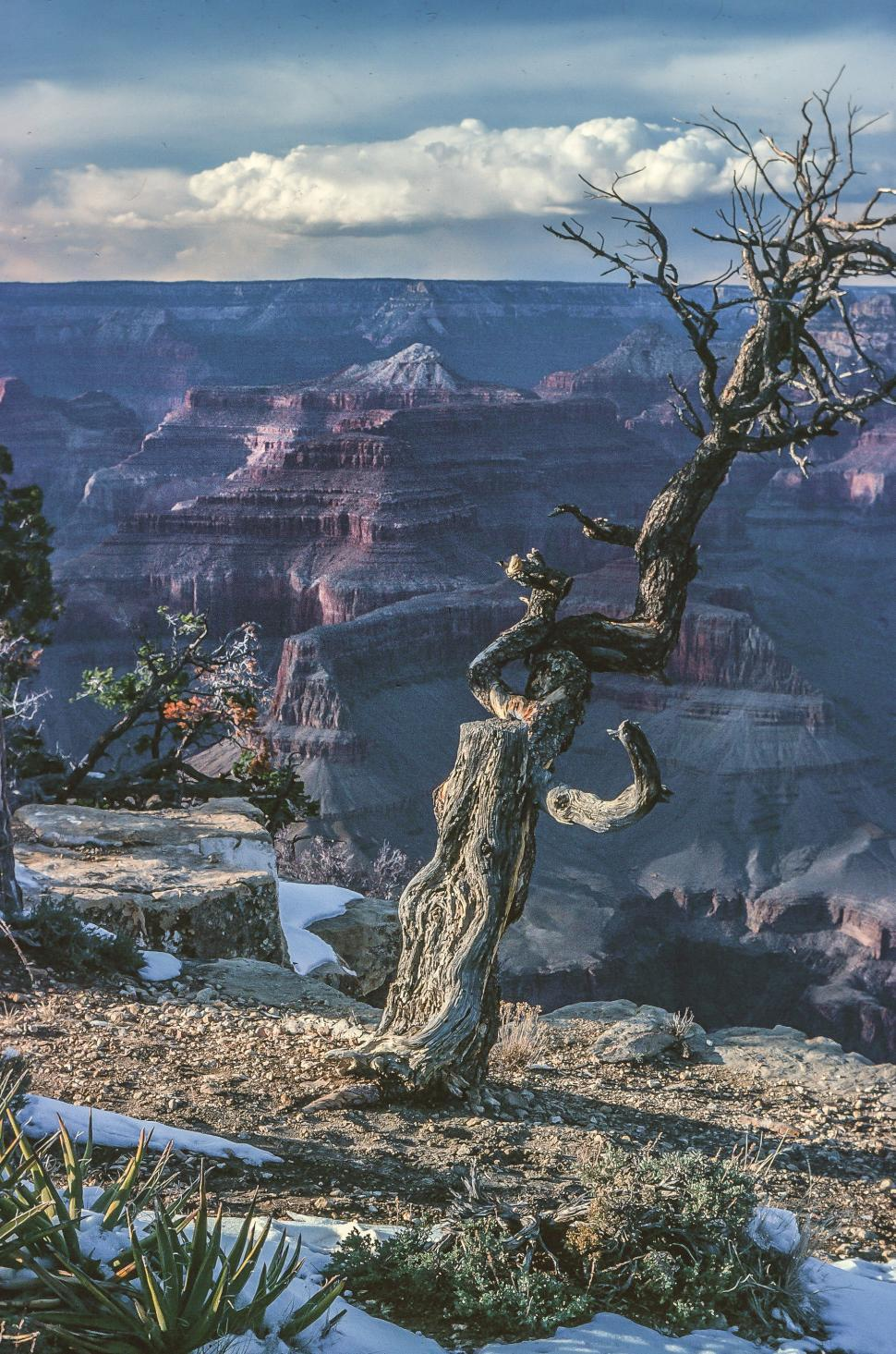 Download Free Stock HD Photo of Grand Canyon Dead Tree Online
