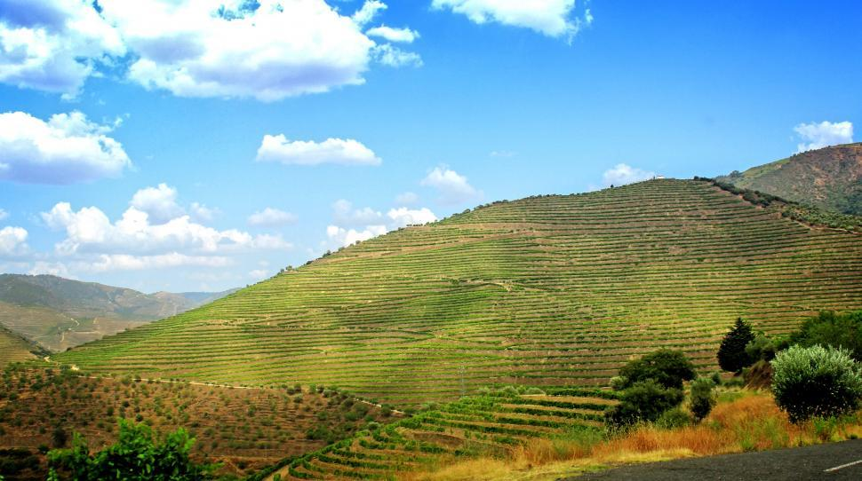 Download Free Stock Photo of Terraced Vineyards - Walled Terraces - Douro Valley