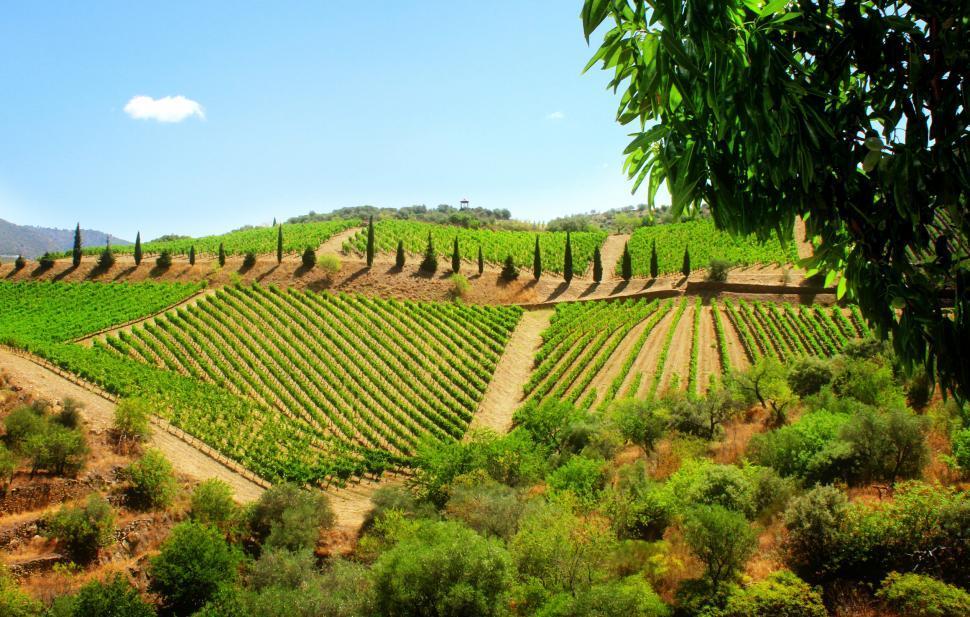 Download Free Stock HD Photo of Vineyard in the Douro Valley - Quinta de Vargellas Online