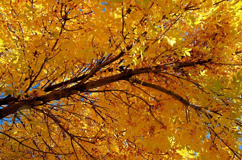 Download Free Stock HD Photo of Colorado Golden Autumn II  Online
