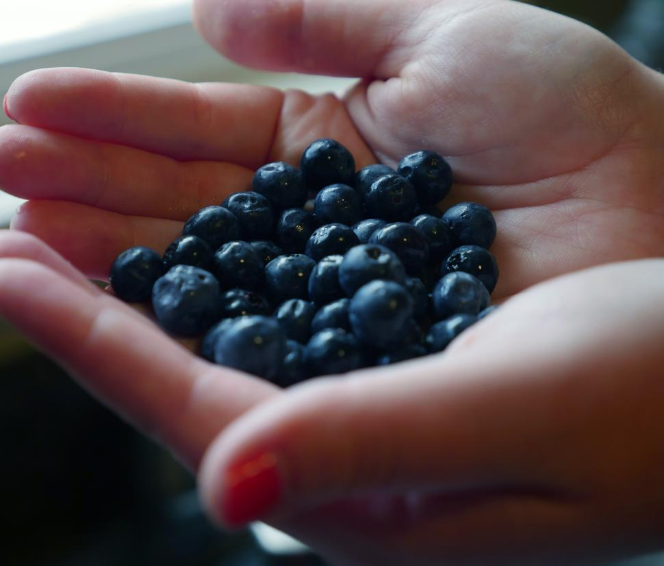 Download Free Stock Photo of Hands filled with blueberries