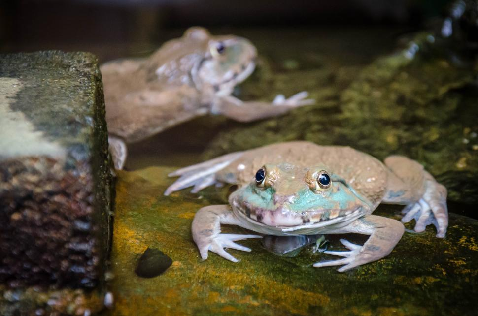 Download Free Stock Photo of Two Frogs