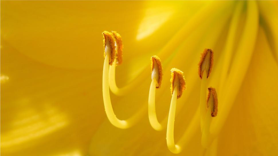 Download Free Stock HD Photo of Yellow Day Lily Flower Parts Online