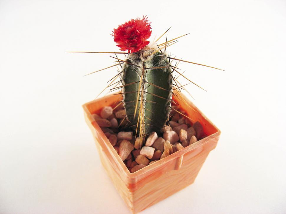 Download Free Stock HD Photo of Cactus Online