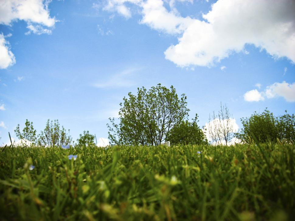 Download Free Stock HD Photo of grass and sky Online