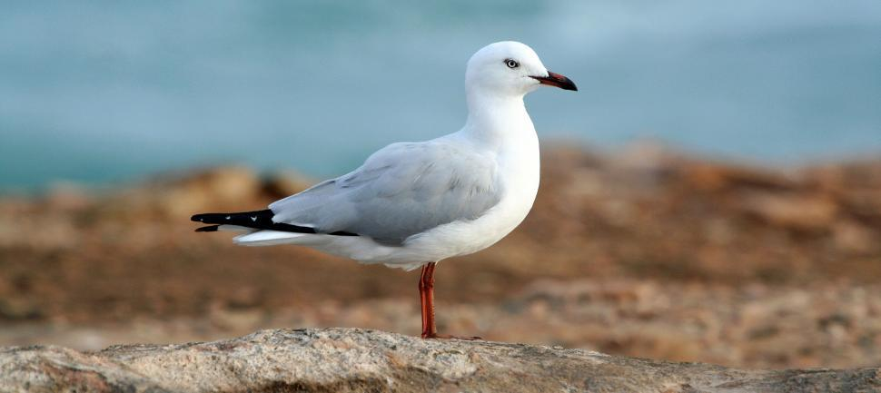 Download Free Stock Photo of feather covering bird albatross animal dove wildlife