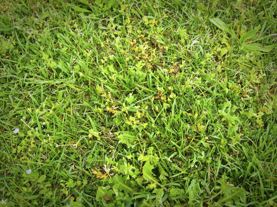 Download Free Stock Photo of grass