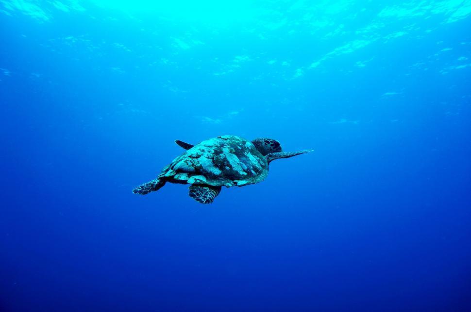 Download Free Stock Photo of scuba diver swimmer diver athlete person explorer contestant aqualung sea swimming ocean water