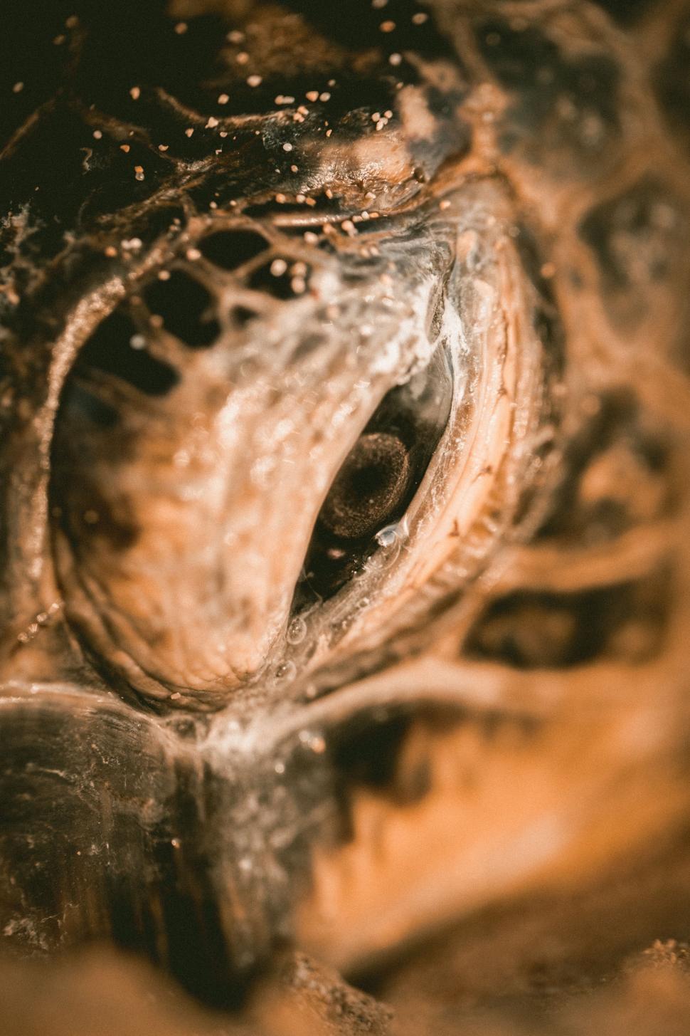 Download Free Stock Photo of snake sidewinder night snake rattlesnake viper reptile pit viper texture