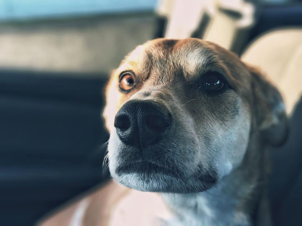 Download Free Stock Photo of dog canine domestic animal boxer bull mastiff animal great dane american staffordshire terrier pet