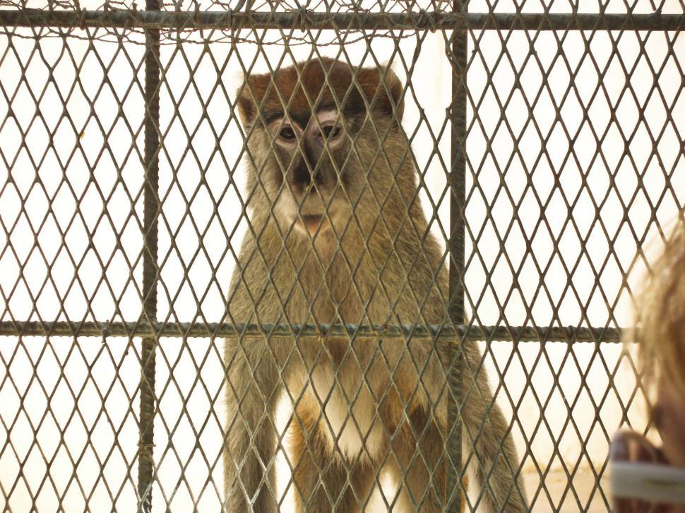 Download Free Stock HD Photo of Caged Monkey Online
