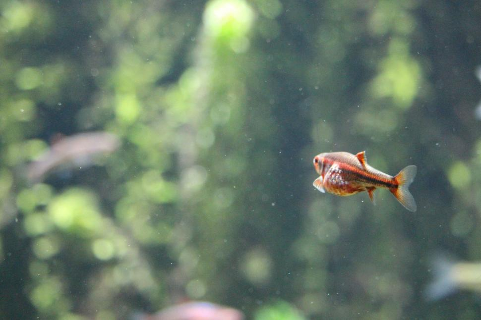 Download Free Stock Photo of crab rock crab crustacean