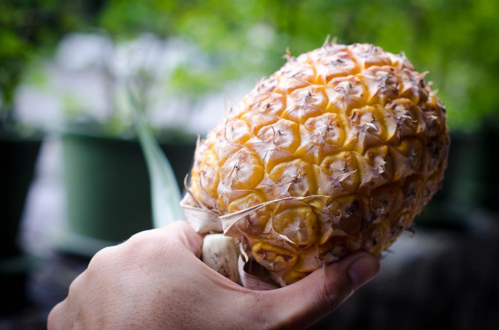 Download Free Stock Photo of Holding a Pineapple