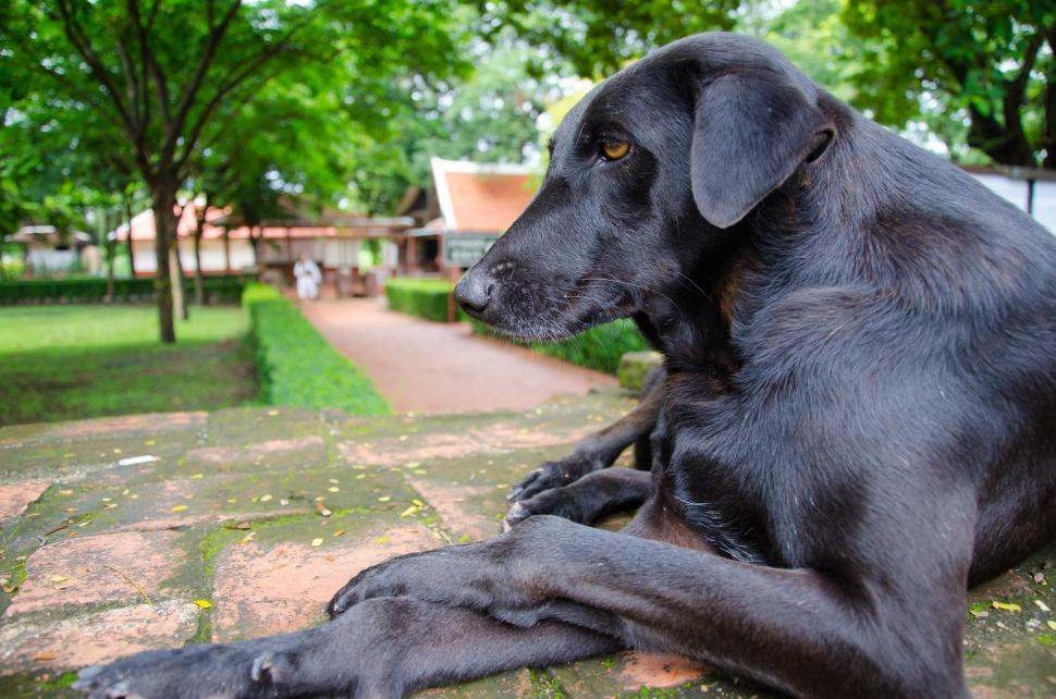 Download Free Stock HD Photo of Black dog in repose Online