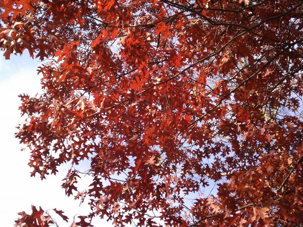 Download Free Stock Photo of Autumn Splendor