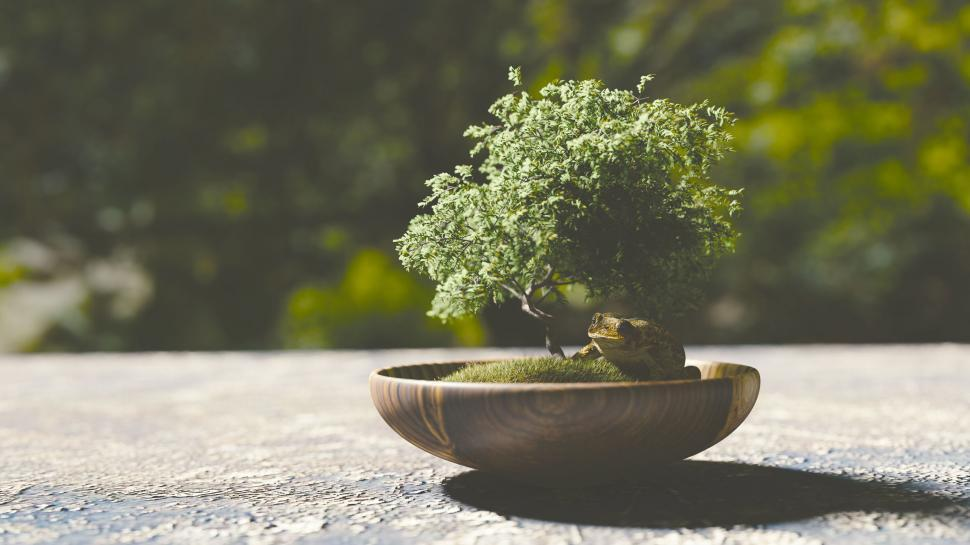 Download Free Stock Photo of Bonsai tree and frog