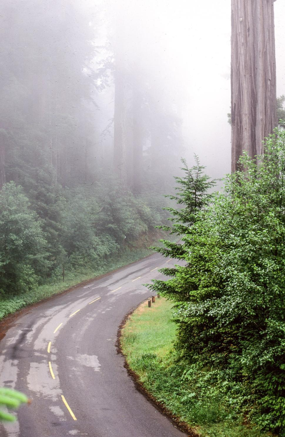 Download Free Stock HD Photo of Road in forest Online