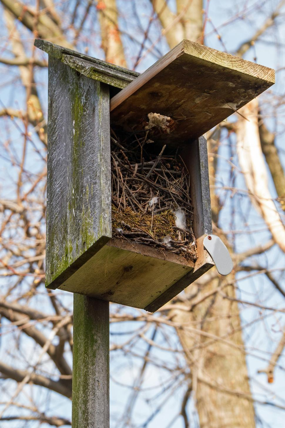 Download Free Stock Photo of Open Birdhouse Showing Nest Materials