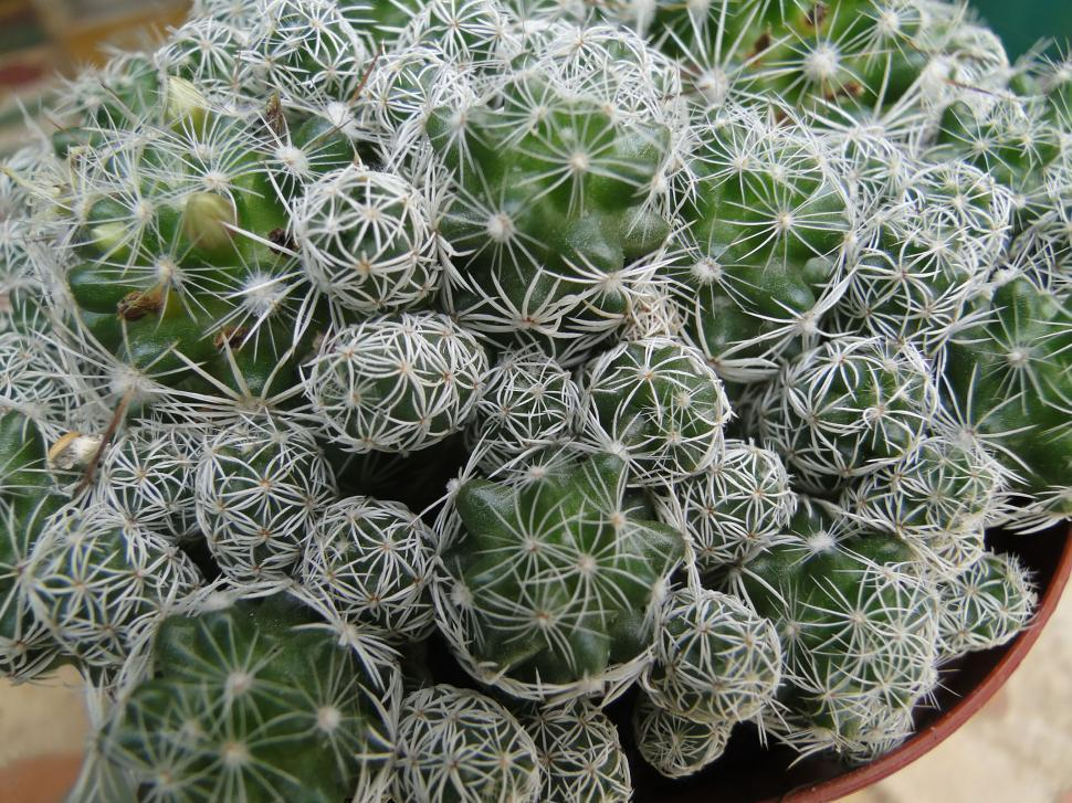 Download Free Stock Photo of Cactus Cluster