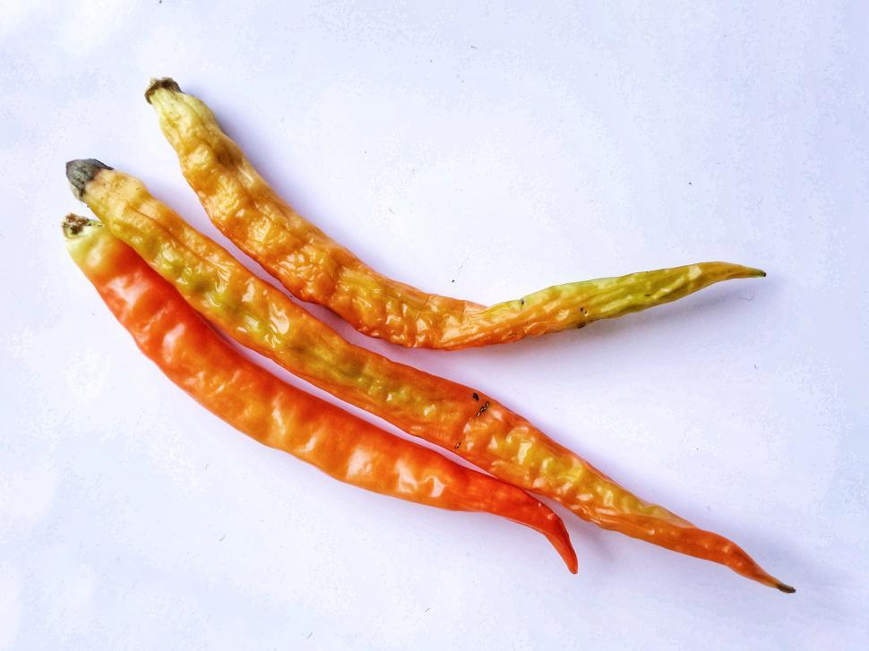Download Free Stock Photo of Pepper or chilli or capsicum