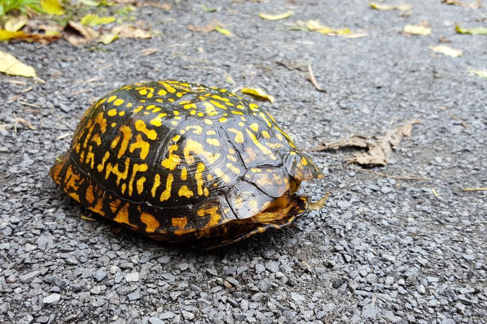 Download Free Stock Photo of Turtle in shell