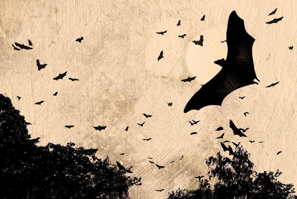 Download Free Stock Photo of Horror and Halloween Concept - Bats Flying Over Woods