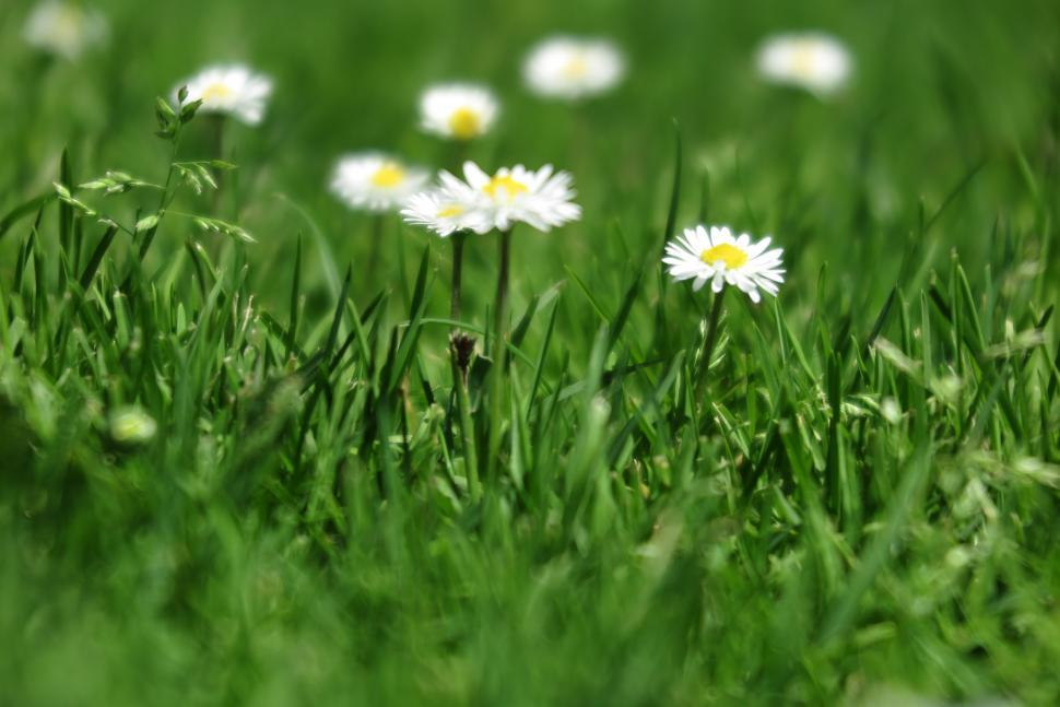 Download Free Stock HD Photo of Flowers in the sun Online