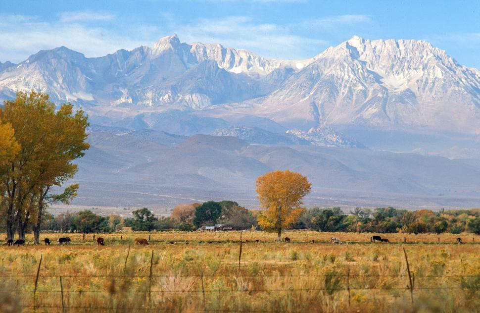Download Free Stock HD Photo of Inyo National Forest in Bishop, California Online
