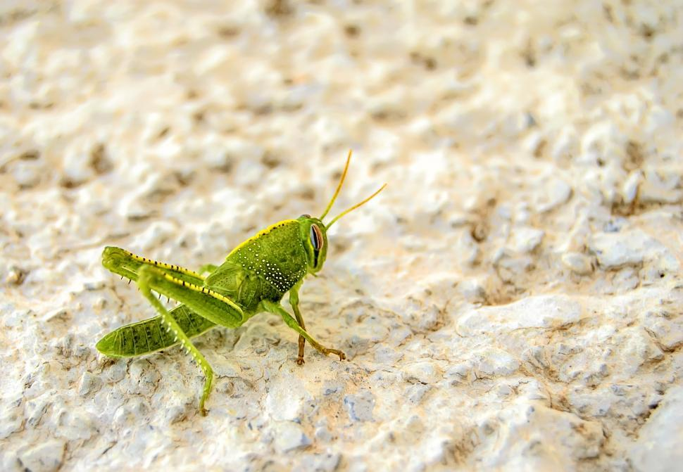 Download Free Stock HD Photo of Bright Green Grasshopper Online
