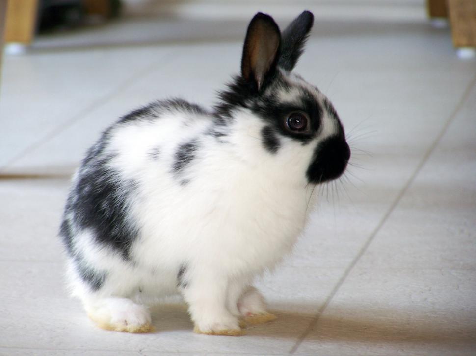 Download Free Stock Photo of Rabbit