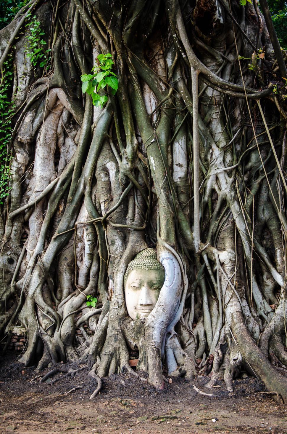 Download Free Stock Photo of Overgrown Buddha Statue