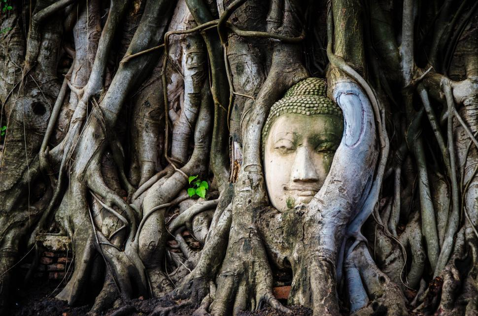 Download Free Stock Photo of Buddha Statue Overgrown by Tree Roots