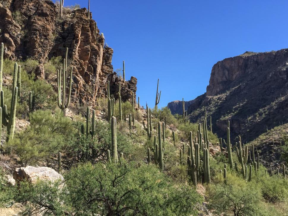 Download Free Stock HD Photo of Sabino Canyon, Tucson Arizona Online