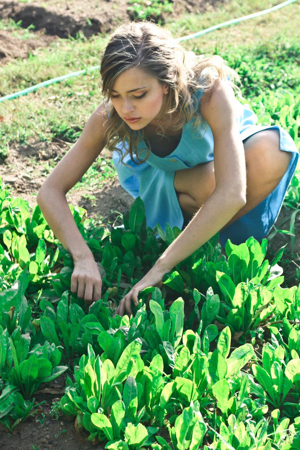 Download Free Stock Photo of A beautiful young woman plucking herbs in the farm