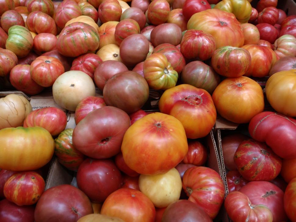 Download Free Stock Photo of Bunch of multi-colored hierloom Tomatos of all sizes