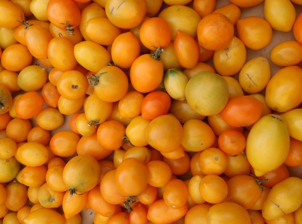 Download Free Stock Photo of Bunch of Yellow-Orange small Tomatoes