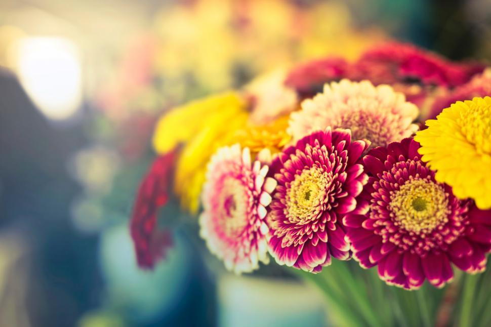 Download Free Stock Photo of Flowers with bokeh background