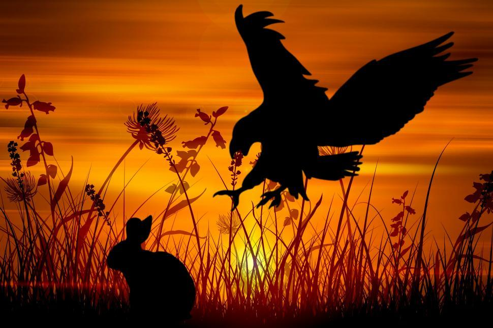 Download Free Stock Photo of eagle hunting rabbit