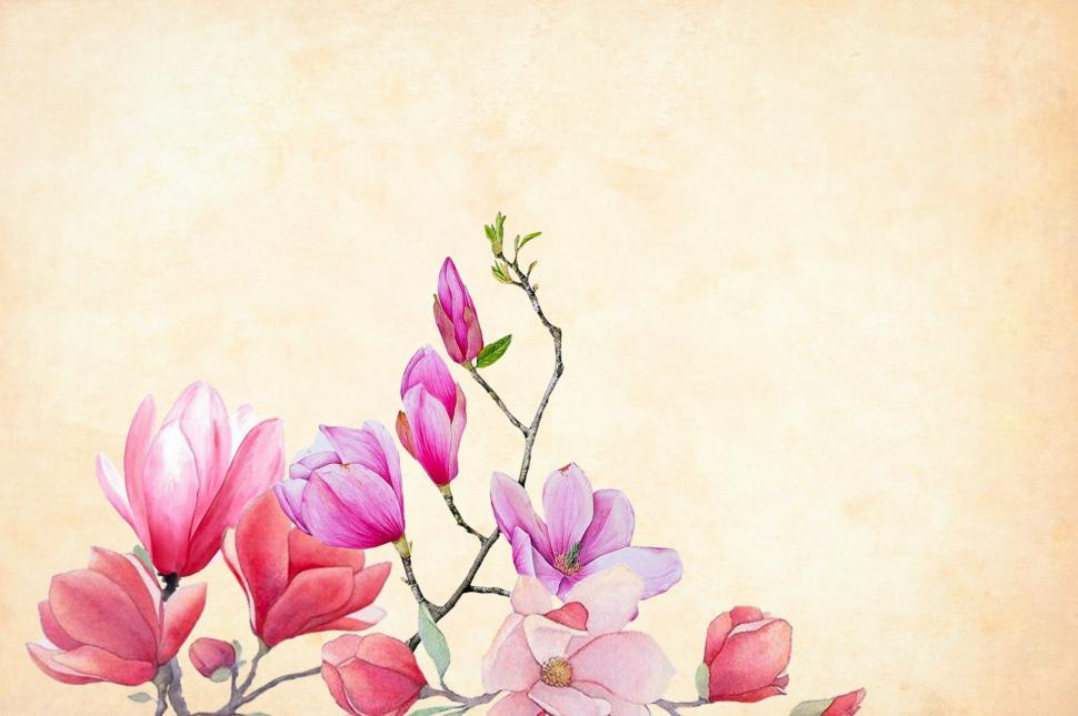 Download Free Stock Photo of flowers over cream colored background