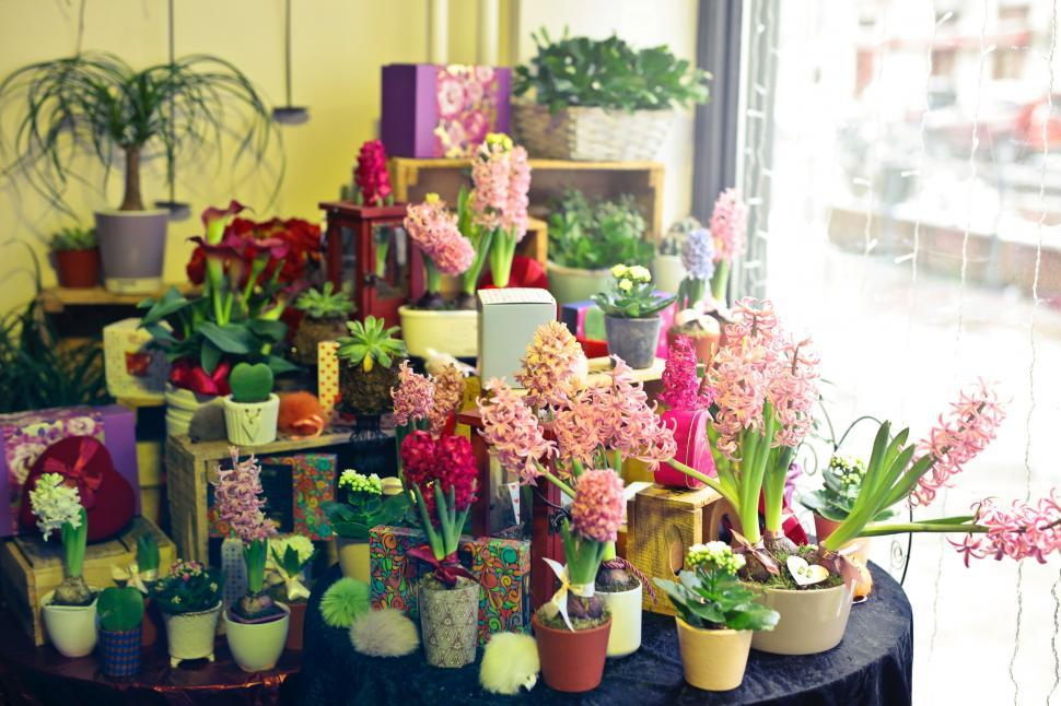 Download Free Stock Photo of A flower shop display section with variety of flowers and plants