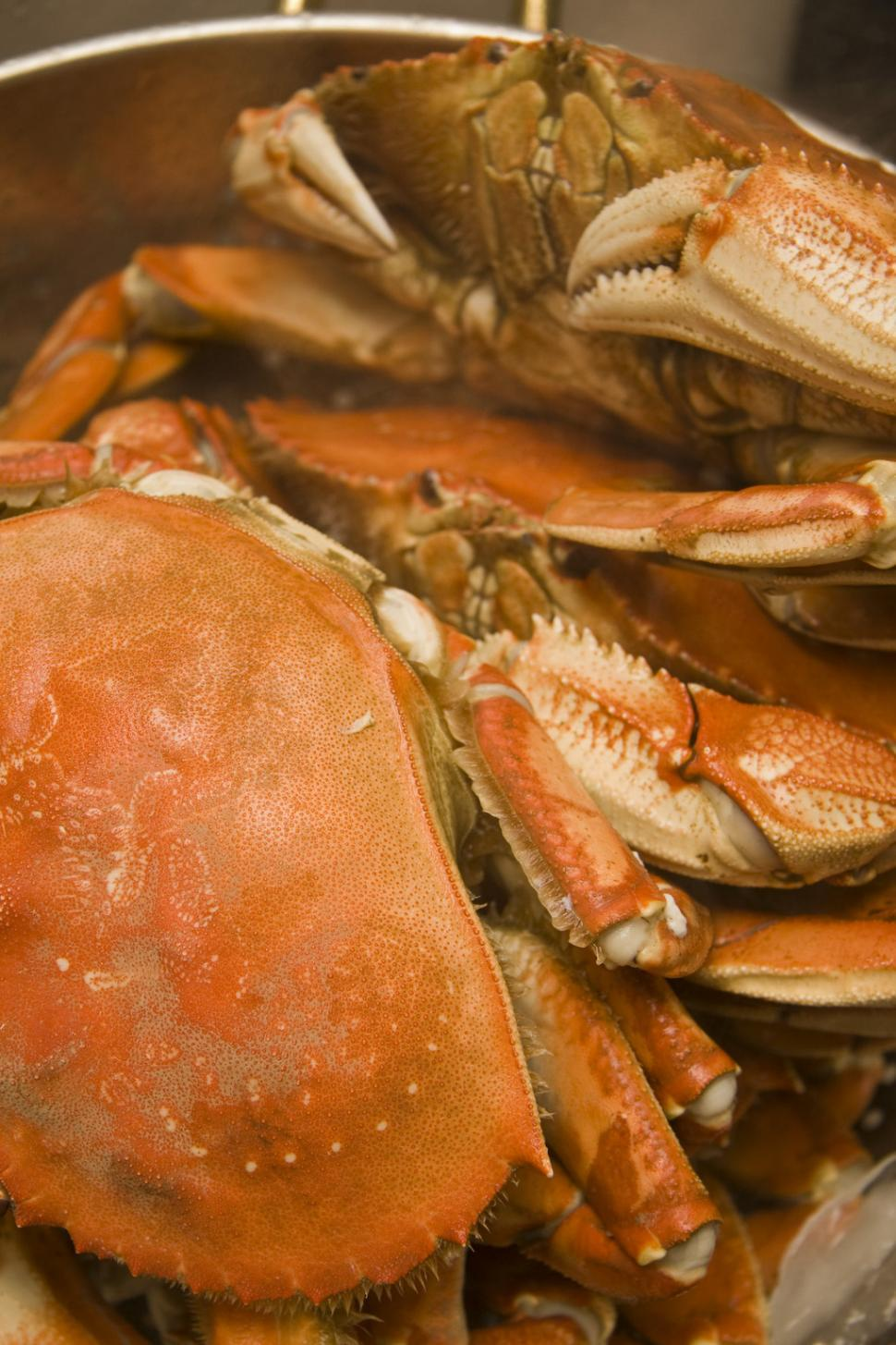 Download Free Stock HD Photo of dungeness crab Online