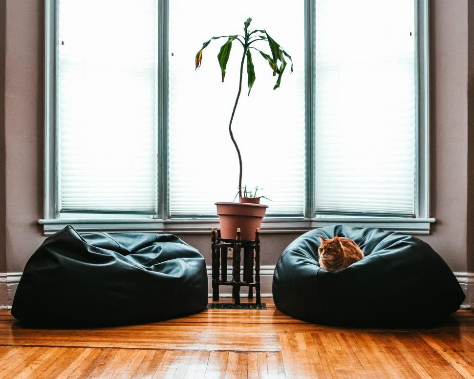 Download Free Stock HD Photo of A cat sitting on bean bag Online