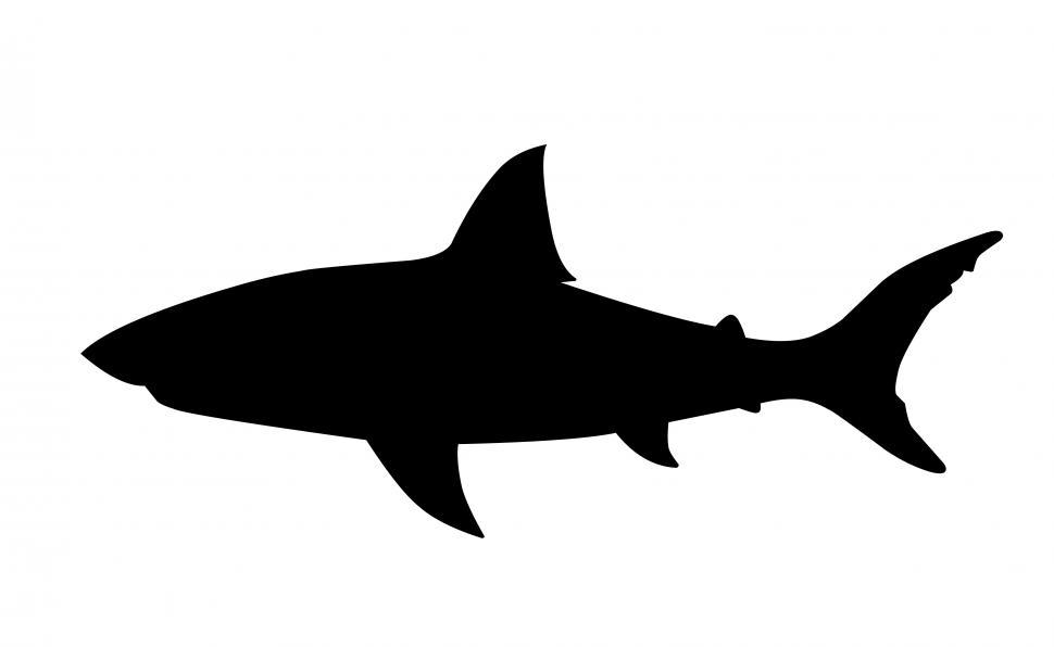 Download Free Stock HD Photo of shark Silhouette  Online