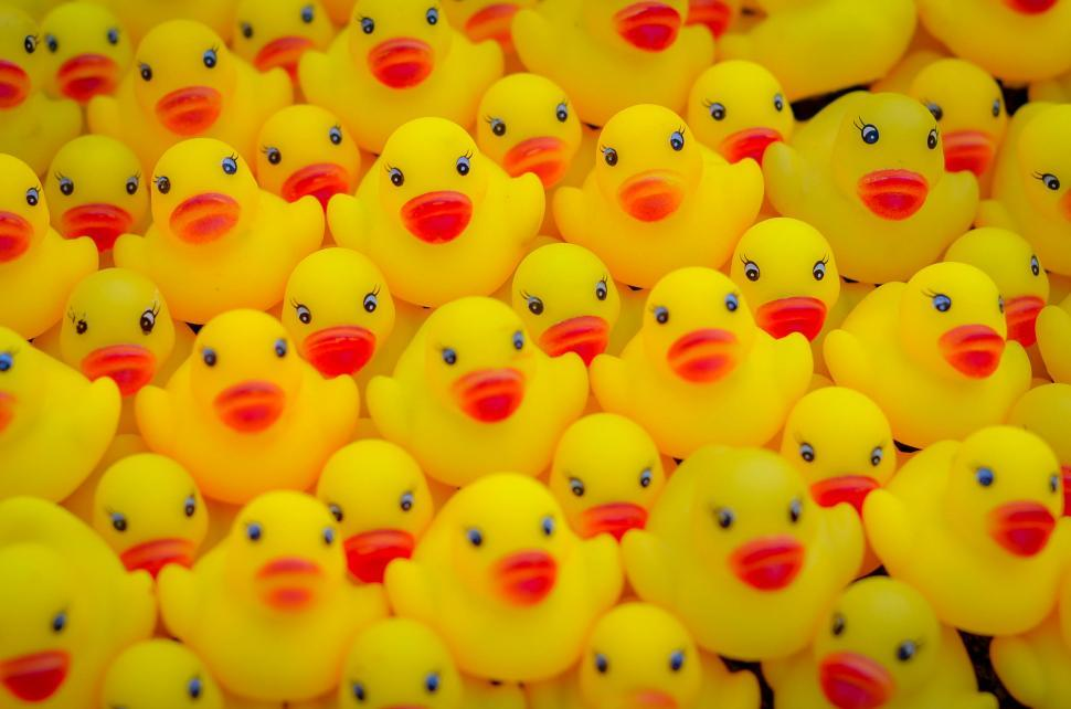 Download Free Stock HD Photo of Yellow Ducks Online